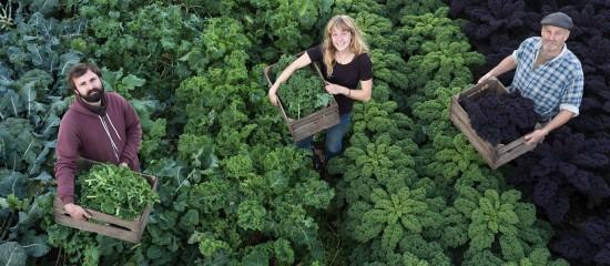 Employeurs agricoles: exonération liée au travail occasionnel ou réduction générale?