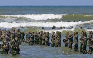 Les activités conchylicoles et les cultures marines sous protection!