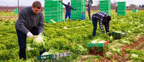 Travailleurs agricoles étrangers: un retour en France sous conditions