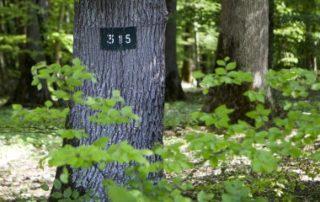Le marché des forêts reste dynamique
