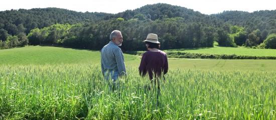 Décès d'un exploitant agricole et option pour une assiette forfaitaire de cotisations